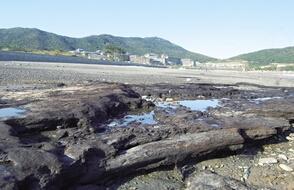 舟山再次发现千年古木层遗迹 保护古木刻不容缓