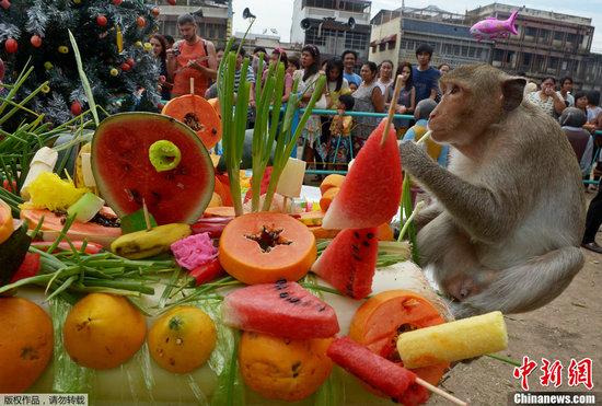 """泰国举行""""猴子自助餐节"""" 馋嘴猴享2吨美食"""