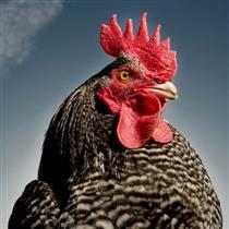 帅气有型的动物肖像
